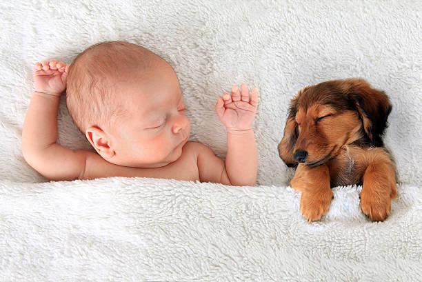 Vergeet niet om een hondenverzekering af te sluiten