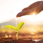 Wietzaden kopen om zelf te kweken